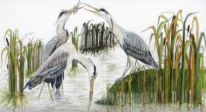 jeanne de chantal nyckees aquarelliste animalier belge peinture hérons