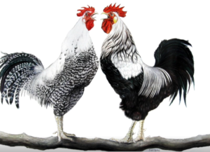 jeanne de chantal nyckees aquarelliste animalier belge peinture joute vocale