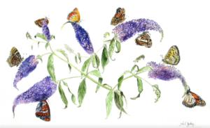 jeanne de chantal nyckees aquarelliste animalier belge peinture l'arbre à papillons