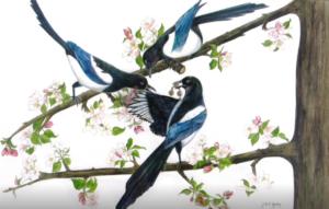 jeanne de chantal nyckees aquarelliste animalier belge peinture pies oiseaux